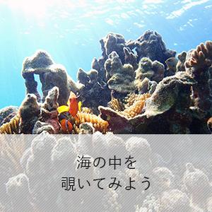 海の中を覗いてみよう